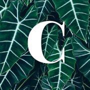 Glosario – C